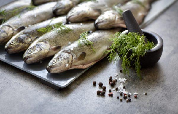 דברים שצריכים לדעת על דגים
